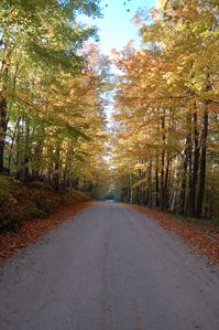 Our street in the Fall. Great place to take a walk- almost no traffic!