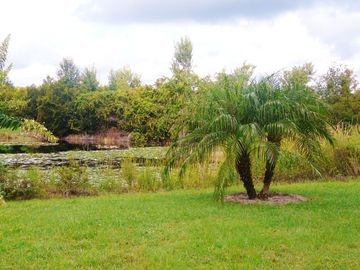 Garden view from lakeside villa in Orlando