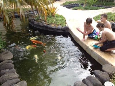 Feeding the Koi Fish in the Pond