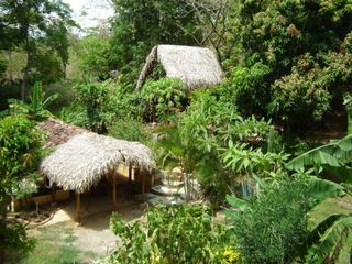 Playa Flamingo cottage photo - Fruit Trees Adorn the Ranchos