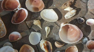 Just a few of the kinds of shells that you can find at the beach!