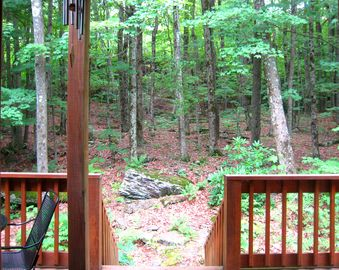 Surrounded by the Forest - Truly a Private & Peaceful Setting!