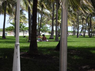 Relaxing park with palm trees. Right between you and the beach