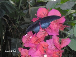 Parksville house photo - Butterfly World is only a short drive