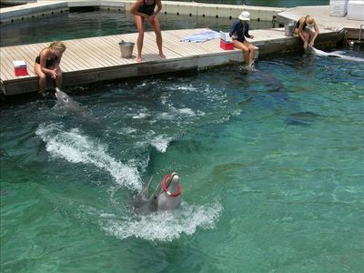 Be sure to save time to visit the dolphins next door at Waikoloa