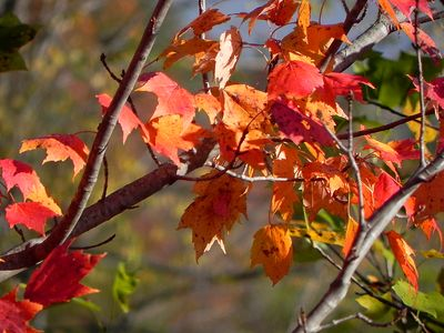 Dillard cabin rental - The Fall Colors Begin in Early October, Usually Lasting Through Early November.
