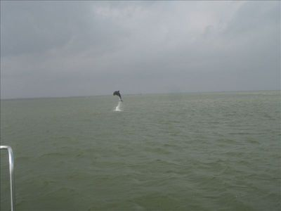 Dolphin frequent the East Cut and can be heard sometimes off the pier at night