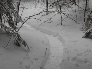 Wilmington house photo - backyard snowshoe trail