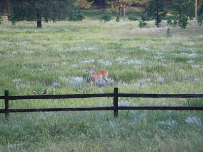 Deer in the front meadow