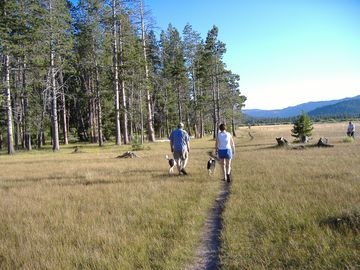 Our favorite-Dog Walking at the Beautiful Mountain Meadow 4 Blocks Away!