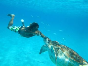 Barbados Sea Turtle!