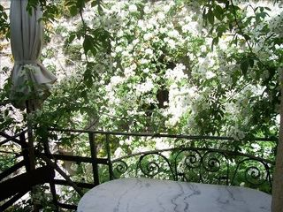 Vaison-la-Romaine townhome photo - balcony in full bloom