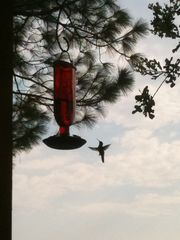Cedar Creek Lake house photo - Watch the Humming Birds in summer