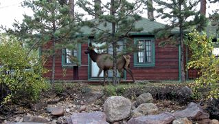 Estes Park cabin photo - Elk Walking By Cabin Deck - October 2011