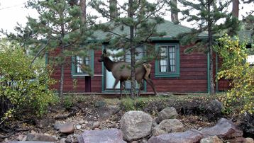 Elk Walking By Cabin Deck - October 2011
