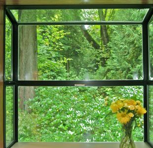 Olympia house rental - The view out the kitchen sink window - gorgeous!