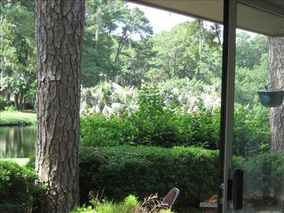 Sea Pines house photo - View from living room-egrets nesting on island