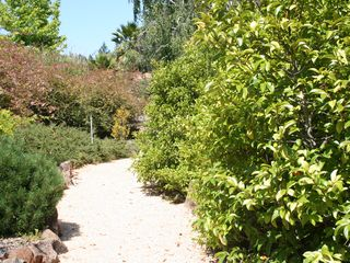 Healdsburg estate photo - Paths around the house