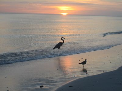 Great Heron and Sandpiper at sunset