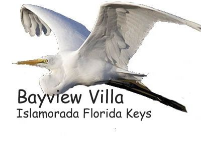 An elegant Egret soars nearby as our Bayview Logo.  Pat Ford Photo