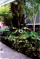 RELAX UNDER THE BANANA & PALM TREES - Provincetown condo vacation rental photo