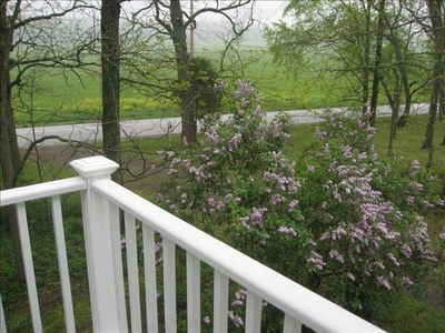 The lilac flowers in early spring as seen from the second floor.
