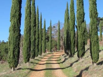 Hiking Trails and views through the Italian Cypress