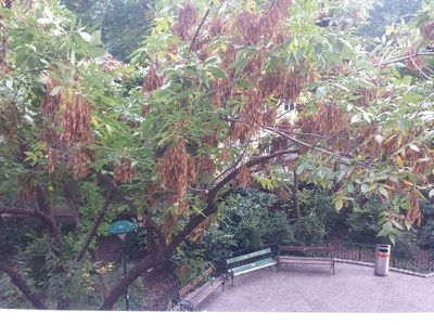 Central apartment with balcony, green view, satellite TV and WiFi, car park on request