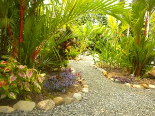 Uvita villa photo - Put the lime in the coconut and explore the gardens.