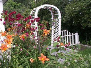 Wells cottage photo - Beautiful Roses and Tiger Lily's