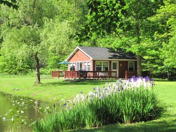 Summertime at The Pond Cottage with iris in bloom