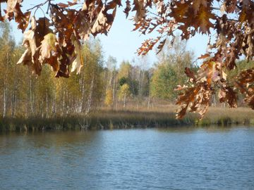 Fall Season - Lagoon in Saugatuck Natural Area