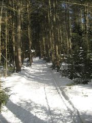 Stowe condo photo - Groomed Cross Country Ski trails like this surround Stonybrook