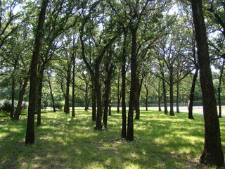 Eagle Mountain Lake house photo - Some of the 130 sixty foot oak trees on 1.5 acres