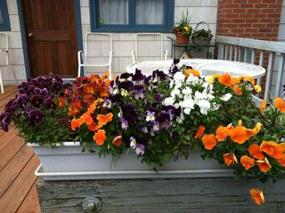 Mercer Island cottage photo - Flowers on front porch.