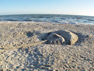 Sanibel Island condo photo - Sand here is great for sand sculptures