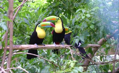 Toucans, green parrots and Scralet macaws are common sights in the neighborhood.