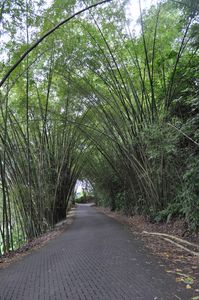 Punta Leona house rental - bamboo covered roads