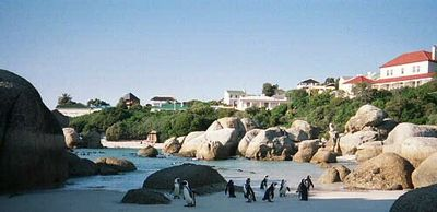 Boulders Beach with House in the background (left, blue-slate roof)