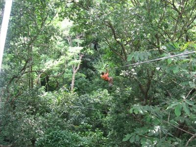 Canopy zipline tour in the habitat adjacent to the casas.