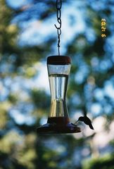 Durango house photo - Hummingbirds off the back deck