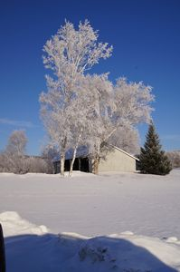 Brookfield cabin rental - Grandpa's workshop on a Frosty Morning, Birch Meadow
