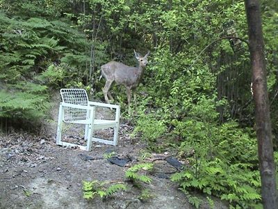 Bellingham chalet rental - A guest took this photo of a deer grazing outside our kitchen.