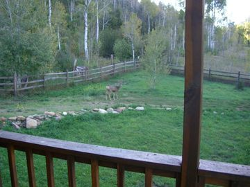 Frequent deer visitor off of west-side porch