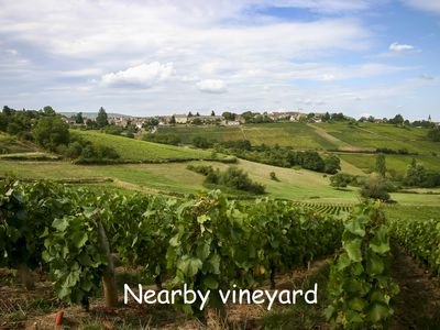 Nearby vineyard