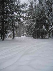 Jay Peak cabin photo - Get out the snowshoes...a fairlyland awaits!