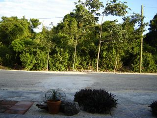 Akumal house photo - The view from the front patio