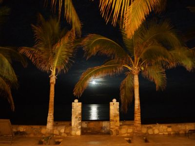 Palms in the moonlight over the Sea of Cortez