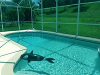 Excellent Deluxe 5BR Villa/Game Room, Wi-Fi, Secluded Pool Hot Tub/10mins Disney