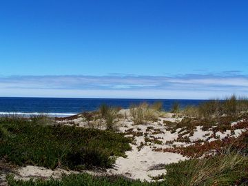 Pajaro Dunes condo rental - Home to a Sea Bird Sanctuary, Pajaro Dunes is an awesome place to see shore life